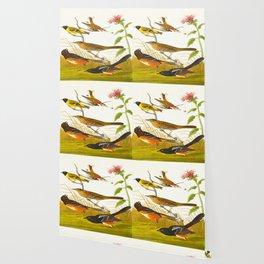 Chestnut-coloured Finch, Black-headed Siskin, Black crown Bunting, Arctic Ground Finch Wallpaper