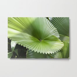 Fan Palms Metal Print