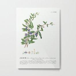 Plantae Selectae No. 68–Lycium or Box-thorn by Georg Dionysius Ehret. Metal Print