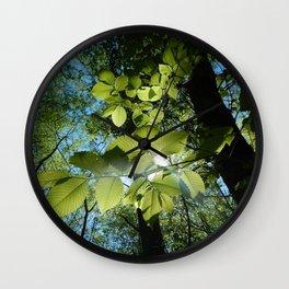 Sunlight Canopy IV Wall Clock