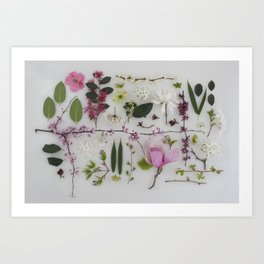 Spring Branches Art Print