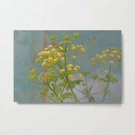 Yellow wildflowers on blue rusty metal Metal Print