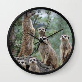 Meerkat 2014-0905 Wall Clock