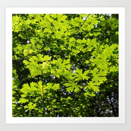 Sun-Dappled Forest in the Spring Art Print