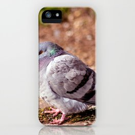 Concept nature : The watchful dove iPhone Case