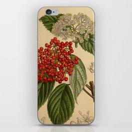 Viburnum betulifolium, Adoxaceae iPhone Skin