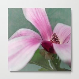 magnolia in the limelight Metal Print