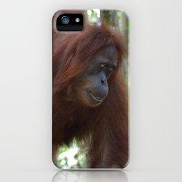 Bukit Lawang Orangutan Sumatra iPhone Case