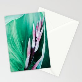 Pink Banana Flower Stationery Cards