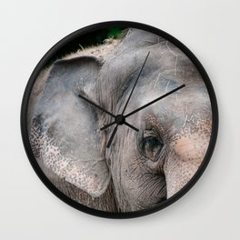 Elephant Eye Spy Wall Clock