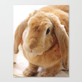 The Velveteen Rabbit Canvas Print