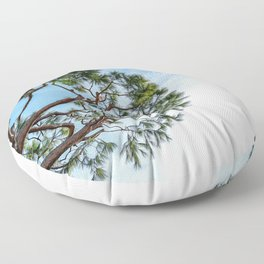 Maritime pine in French Riviera in a sunny winter day Floor Pillow