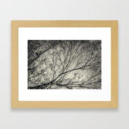 Incandescence bw ambro Framed Art Print