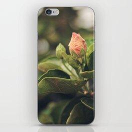 Capullo de Hibisco - Hibiscus bud iPhone Skin