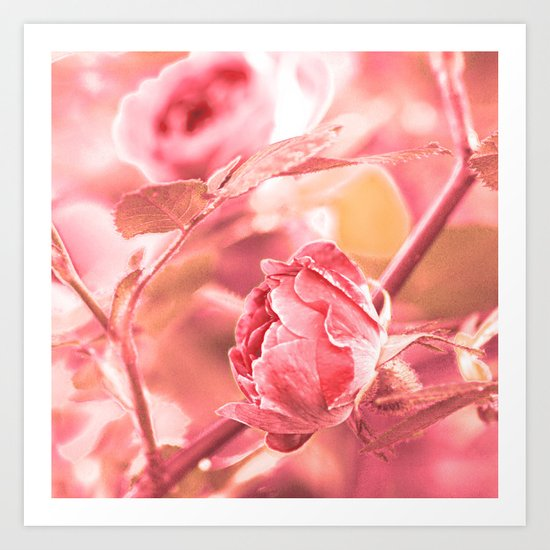 Vintage rose. Art Print