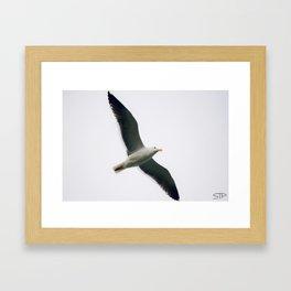 Simple Seagull Framed Art Print