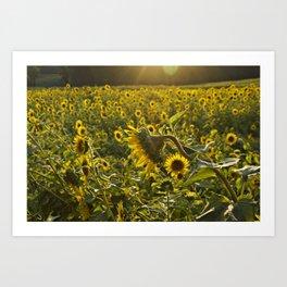 Sun Kissed Sunflower Art Print