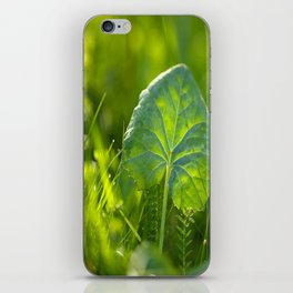 Large Green Leaf On A Sunny Background decor #society6 #homeart iPhone Skin