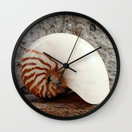 Seashell Series (No. 1) Wall Clock