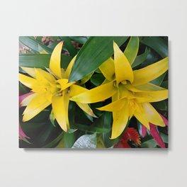 Yellow guzmania tropical flower Metal Print