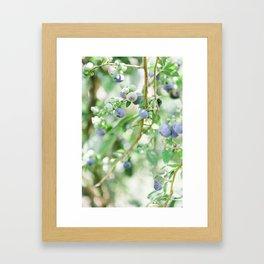 Blueberry Days Framed Art Print