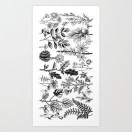 Stems and petals Art Print