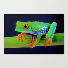 TREE FROG ON BAMBOO Canvas Print