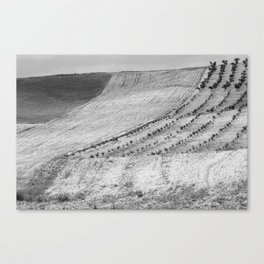 Cereal fields. BN Canvas Print