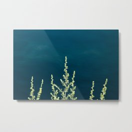 Some herbs Metal Print