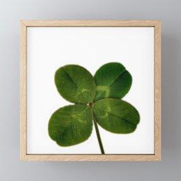 Four Leaf Clover Framed Mini Art Print