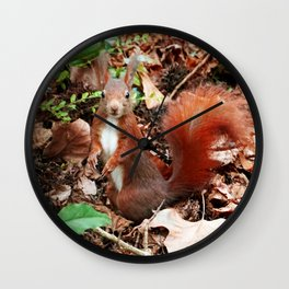 Do you have nuts for me? Wall Clock