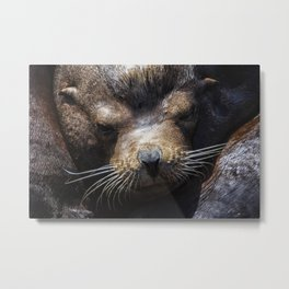 Sleepyhead Sea Lion Metal Print