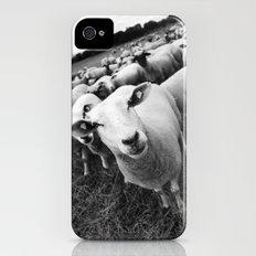 Sheep iPhone (4, 4s) Slim Case