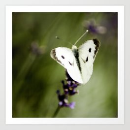 Butterfly Dream 2 (Square) Art Print