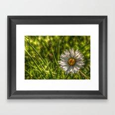 Solitaire Daisy 15 Framed Art Print