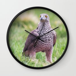 Northern Goshawk Wall Clock