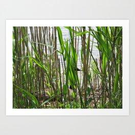 natural habitatural Art Print
