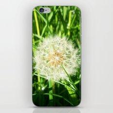 Dandelion Remnants iPhone & iPod Skin
