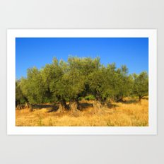 Olive Trees Art Print