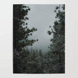 Backwoods Winter: Ponderosa Pines, Washington Poster
