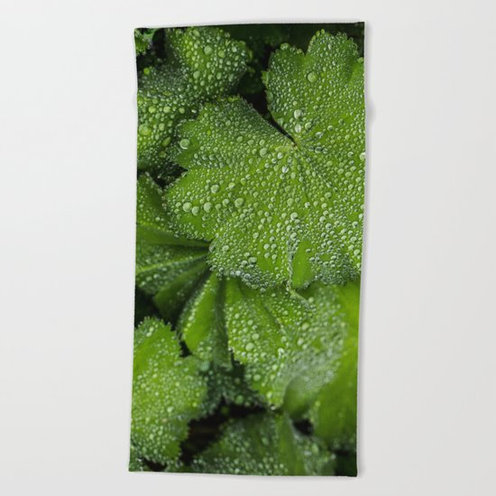 Water drops on fresh green Leaf Beach Towel