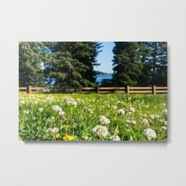 Alaskan Wildflowers Metal Print