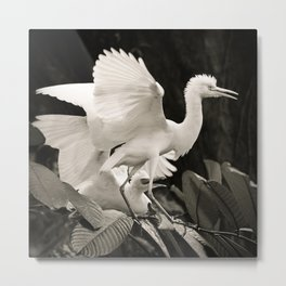White bird dance 3 Metal Print