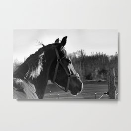 Looking Metal Print