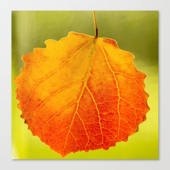 Colorful Autumn Leaf Canvas Print
