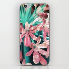 Sunny Agapanthus Flower in Pink & Teal iPhone & iPod Skin