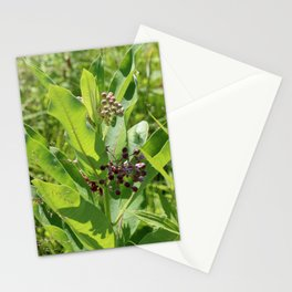 Multi Colored Milkweed Blossoms Stationery Cards