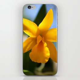 Yellow Orchid iPhone Skin
