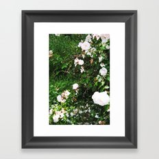 chintz Framed Art Print