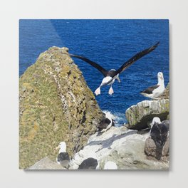 Flying Albatross Metal Print